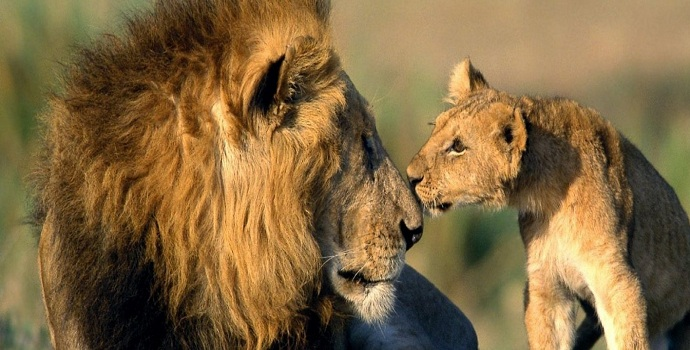 important-information-about-Gir-National-Park-768x294@2x